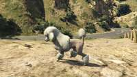 How to turn into a poodle in GTA 5.
