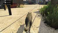 In GTA 5 you can turn into a coyote!
