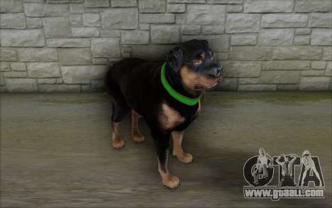 Rottweiler from GTA 5 for GTA San Andreas