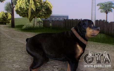 Rottweiler from GTA 5 for GTA San Andreas second screenshot