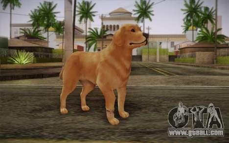 Rottweiler for GTA San Andreas