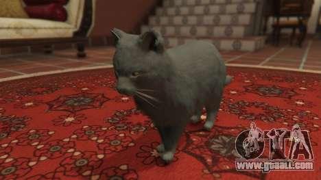 GTA 5 Gray House Cat